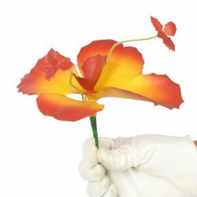 Fjärilsblomma 20 cm