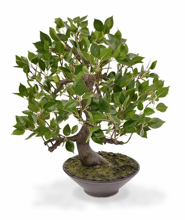Konstgjord bonsai Fikus Wiandi 45 cm
