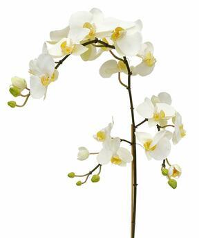 Konstgjord gren av Orchid vit 110 cm