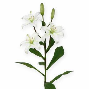 Konstgjord gren Lilja vit 50 cm