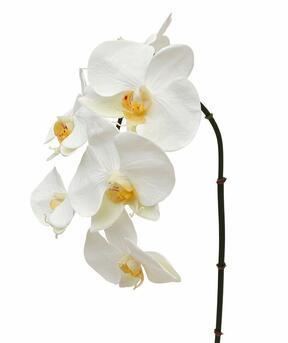 Konstgjord grengren orkidé vit 55 cm