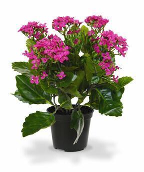 Konstgjord växt Kalanchoa lila 30 cm