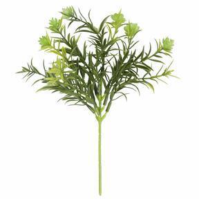 Konstig kvist Boxwood 19 cm